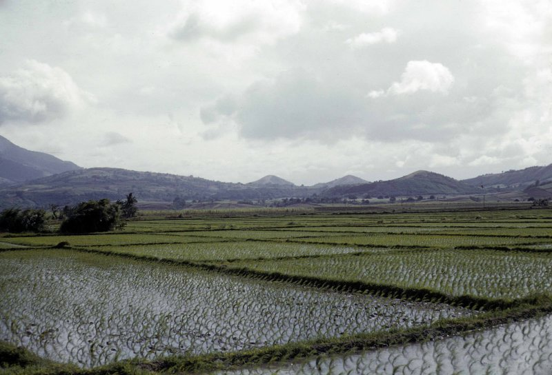 rice-field_0